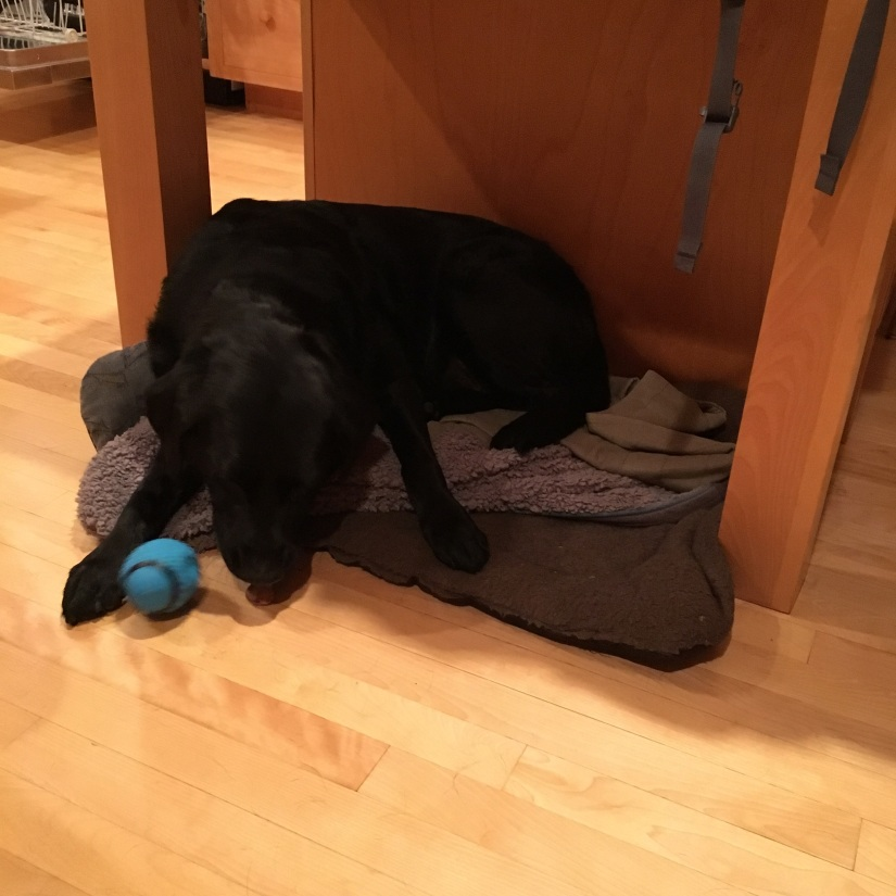 Mopsy, on her matt under a table, chews on a bone with her paw on a small blue football