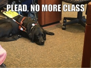 "Mopsy lying at Jameyanne's feet in civil procedure class. Mopsy looks sad, and text above her head reads ""Please: No More Class!"""