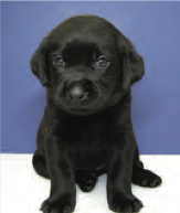 Picture shows Neutron as a puppy sitting in front of a white and blue background. He is all head and paws.
